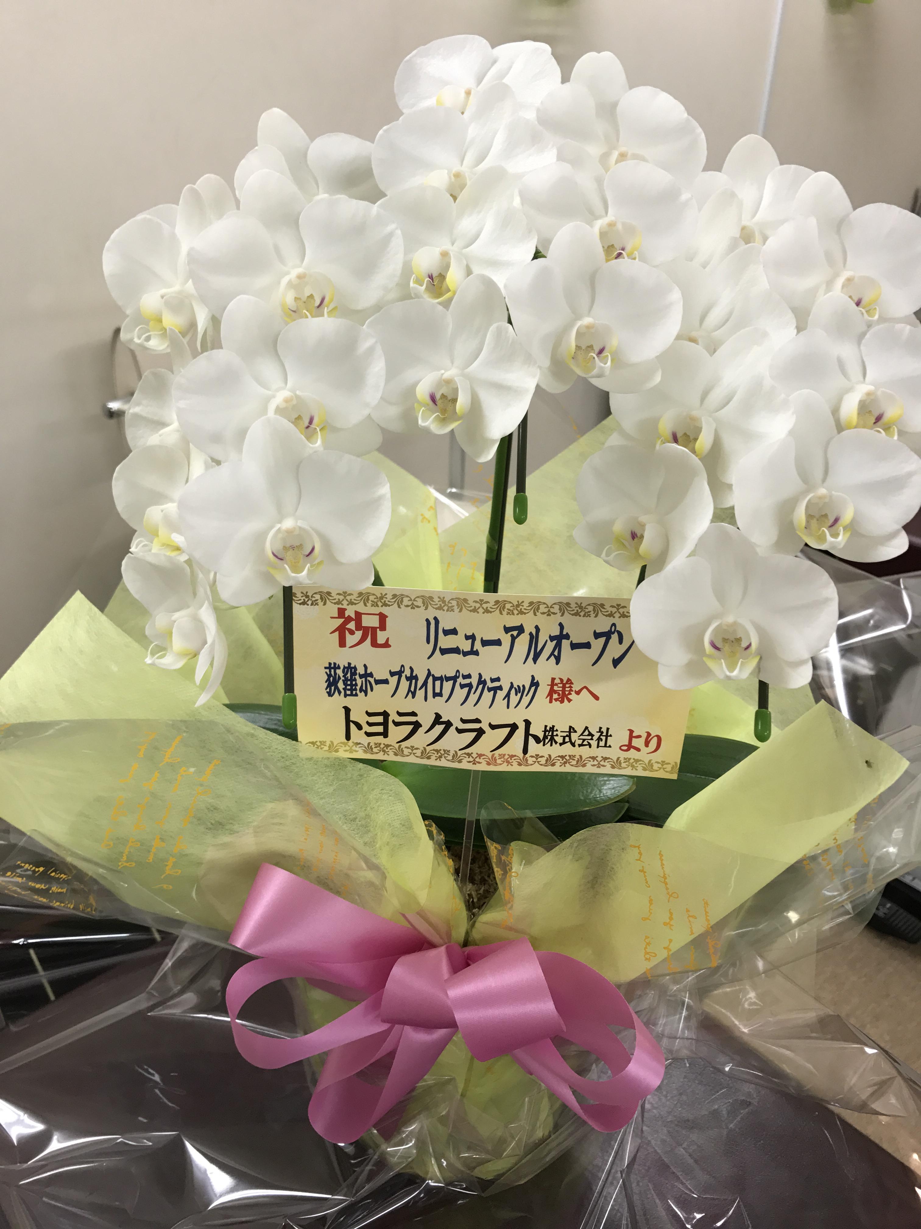お花頂きました。