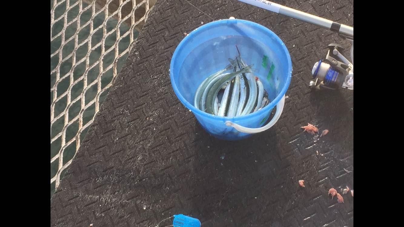 福岡市西区の海釣り公