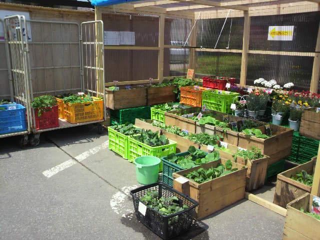 各種野菜苗[ 入荷し