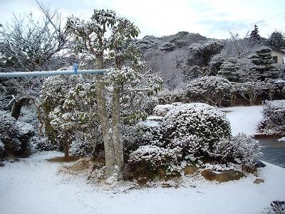 雪化粧(2)