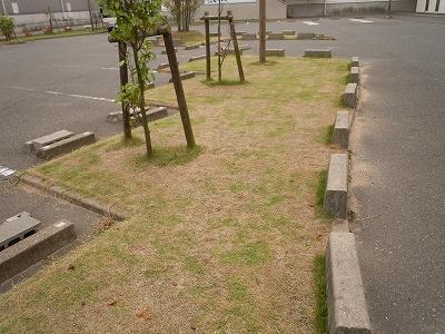 刈り後(1)
