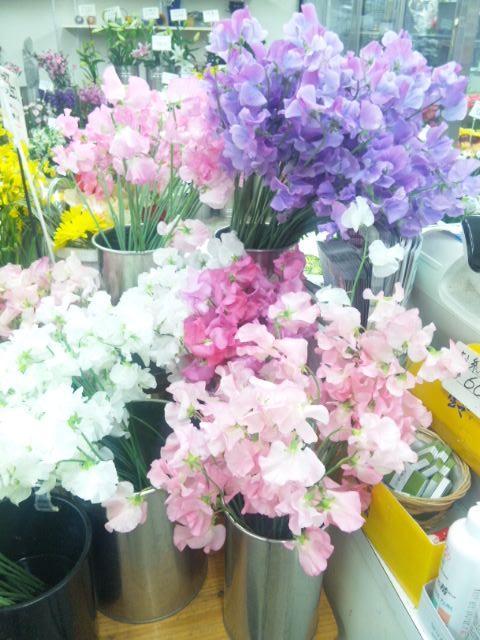 春の花スイートピー
