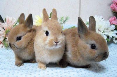 ウサギ3匹