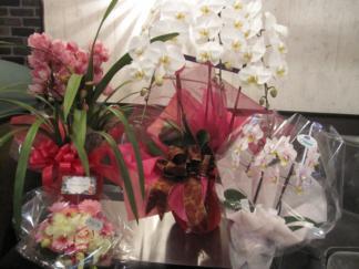 女の子達の花