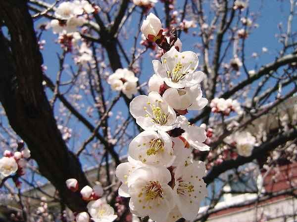 春はまだかな〜!