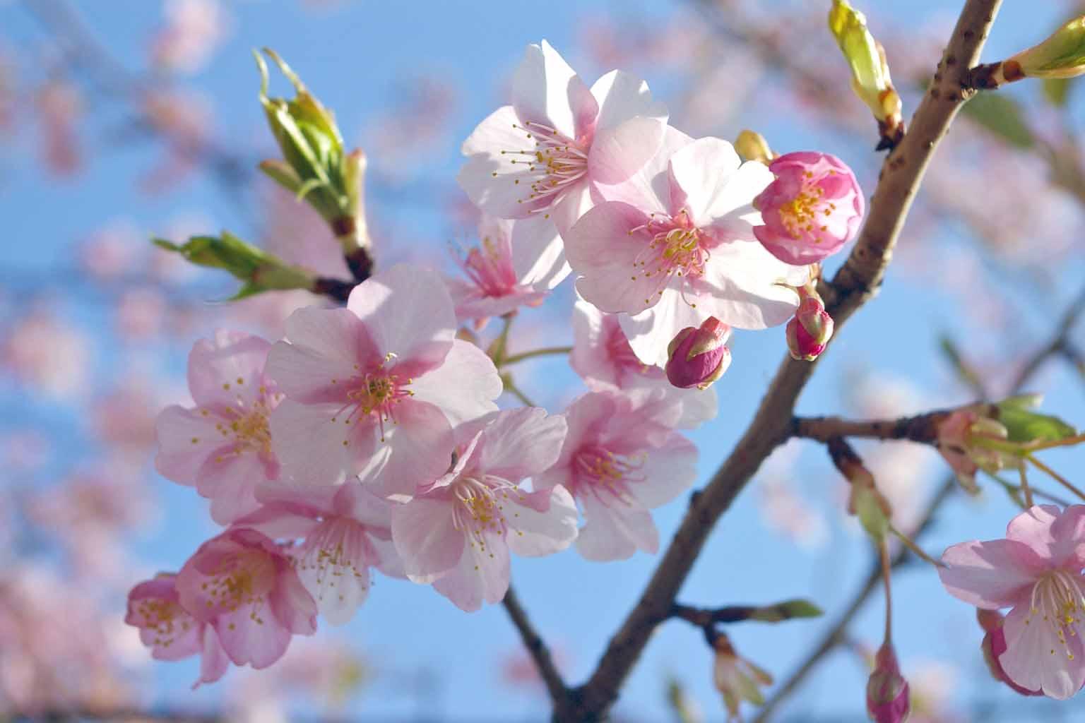 春がくるぞ〜☆