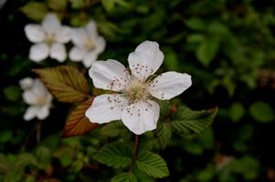 路傍の見知らぬ花