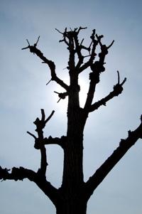 逆光と街路樹