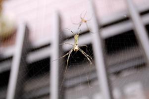 我が家在住の蜘蛛