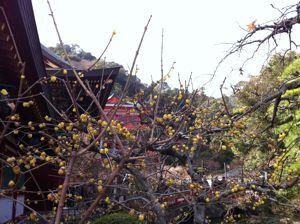 祐徳稲荷2012-4