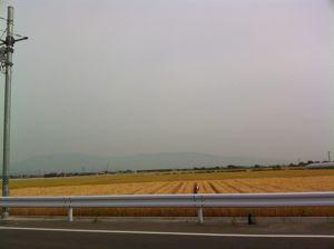 佐賀平野の麦畑