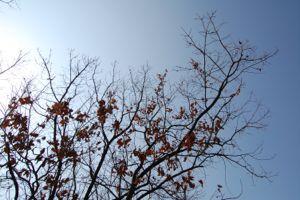 冬の名残(3)
