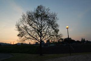 春の夕焼け。