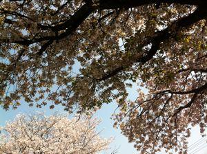 春も終わり。