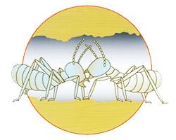 白蟻から白蟻へ伝播