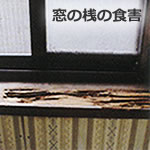 シロアリの被害状況窓