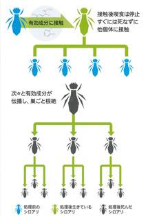 シロアリ感染経路