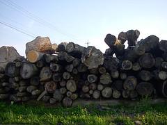 積み木の原料