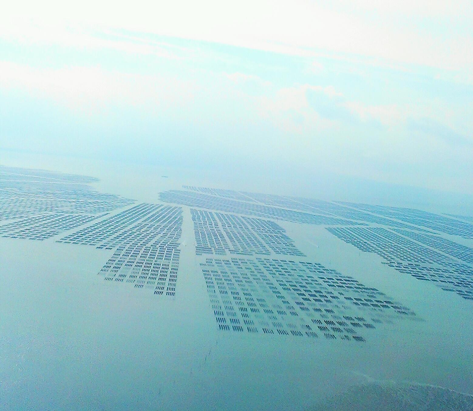 海苔養殖の有明海