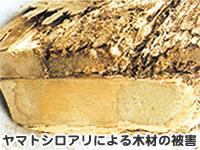 シロアリ木材の被害