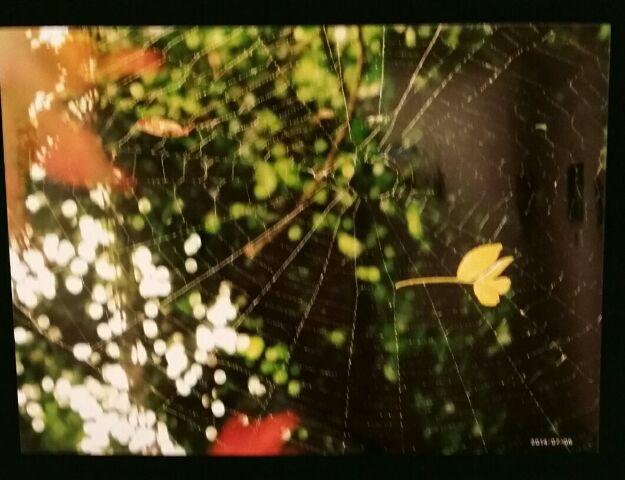 美しきクモの巣