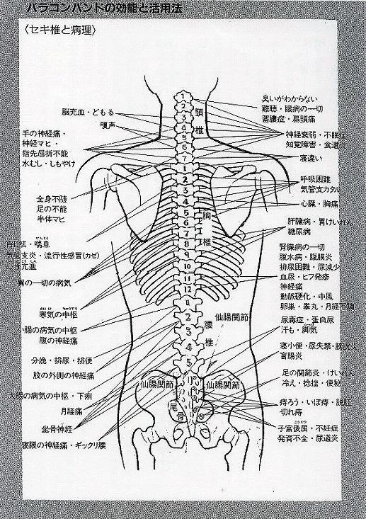 脊椎と病理